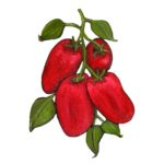 cropped-Posardi-final-tomato-single.jpg